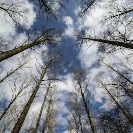 Holding back the clouds by Garry Chisholm - Nature Up Close Trees & Bushes ( garry chisholm, sky, nature, tree, cloud )