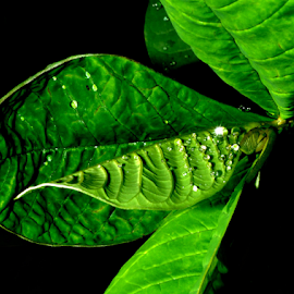 by Aloke Paul - Nature Up Close Leaves & Grasses