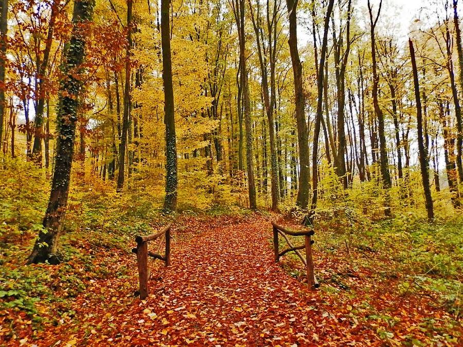 by Bojan Rekic - Landscapes Forests