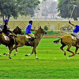 polo by Mohsin Raza - Sports & Fitness Other Sports