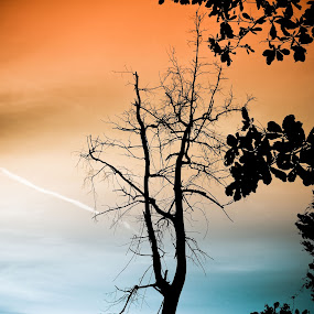 Sunset by Juanis Attau - City,  Street & Park  Street Scenes ( sky, old tree, sunset )