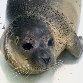 by Alan (Mop) Lewis - Instagram & Mobile iPhone ( seal sea life sanctuary hunstanton olloclip ollocliptelephoto olloclipstudio )