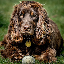 No EASTER EGG just a moldy old tennis ball! by Brian Noel - Animals - Dogs Playing
