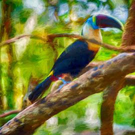 Bird on a tree by Pravine Chester - Digital Art Animals ( bird, digital manipulation, digital art, toucan, digital painting, digital photography, animal )