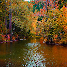 red forest by Mrak Rado- Fotograf - Landscapes Forests ( red, autum, lake, forest, colorfull,  )