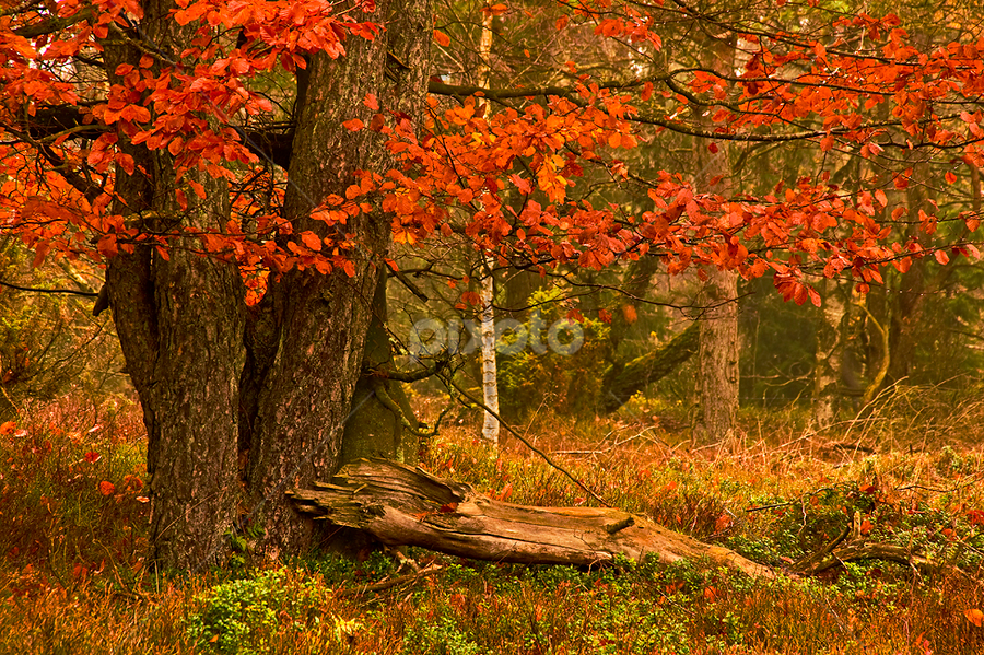 Autum leaves by Peter Samuelsson - Landscapes Forests