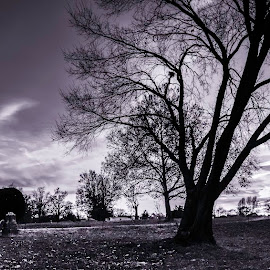 Sunset in the park B&W by Dan Miller - Novices Only Landscapes ( park, tree, black and white, sunset, landscape, golden hour )