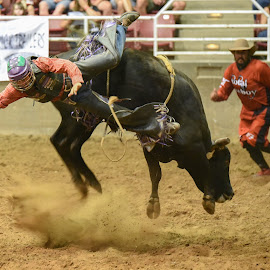 Brace for Impact by Givanni Mikel - Sports & Fitness Rodeo/Bull Riding ( cowboy, utah, riding, rodeo, bull )