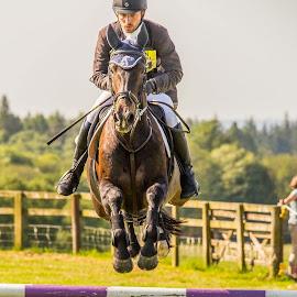 Airborne at Scotsburn Horse Trials  by Gordon Bain - Animals Horses ( scotland, equestrian event, scotsburn. )