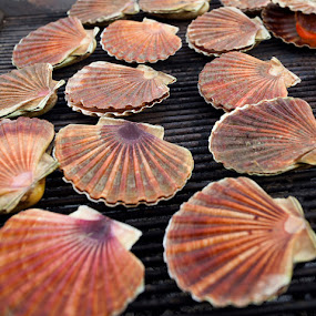 Clamshells by Miranda Legović - Food & Drink Cooking & Baking (  )