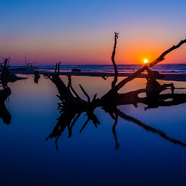 ocean rise by Jared Simmons - Novices Only Landscapes ( driftwood, ocean, sunrise, landscape, south carolina )