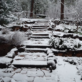 First Snow by John O'Connell - Novices Only Landscapes ( winter, snow, white, stones, garden )