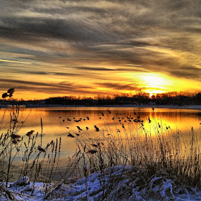 by Lori Taylor - Instagram & Mobile iPhone ( grasses, winter, nature, sunset )