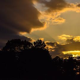 Golden Sunset by Aeriel White - Landscapes Sunsets & Sunrises ( color, blue, sunset, gold, sun, golden )
