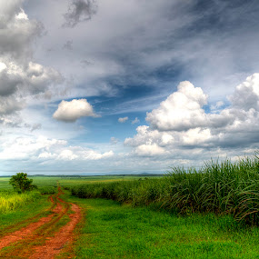 The NeverEnding Pathway by Nadzli Azlan - Landscapes Prairies, Meadows & Fields