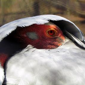 Place to Hide by Ravi Shankar Dutta - Animals Birds