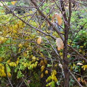 Raining day :) by Nicoleta Nastasa - Nature Up Close Trees & Bushes