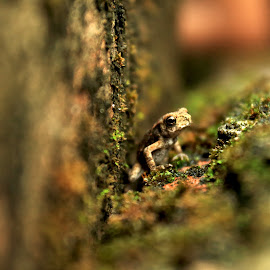 Lonely at Corner by Er Subhadip Das - Animals Amphibians ( animals, corner, frog, amphibian, animal )