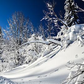 Lepote zime by Bojan Kolman - Nature Up Close Trees & Bushes (  )