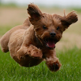 Little Super Dog! by Mike Craig - Animals - Dogs Running