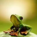 I Am Cute Frog