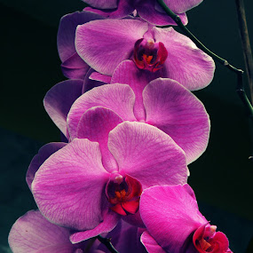 orchid by Ad Har - Nature Up Close Flowers - 2011-2013