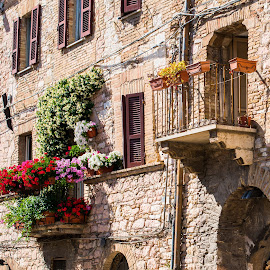 Assisi by Photoxor AU - Buildings & Architecture Architectural Detail ( building, windows, flowers, italy, assisi, balcony )