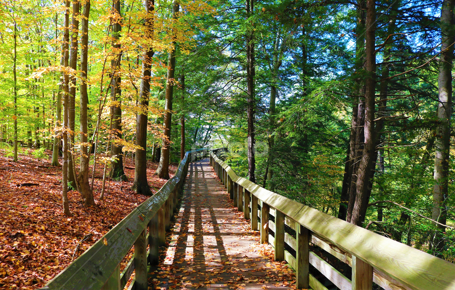A Fall Boadwalk by Paul S. DeGarmo - Uncategorized All Uncategorized ( park, colorful, fall, view, boardwalk,  )