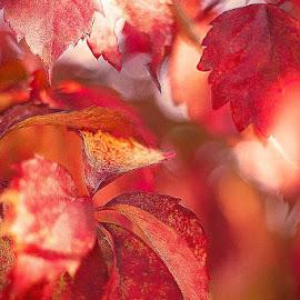 Autumn's Splendor by Nancy Senchak - Nature Up Close Leaves & Grasses