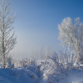 Frozen and Frosty by Chad Roberts - Nature Up Close Trees & Bushes ( blue sky, winter, sky, cold, tree, fog, snow, frost, morning, frozen )