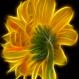 Electrified Gerbera by Millieanne T - Digital Art Things ( green, gerbera daisy, frac filter, stem, yellow, flower )
