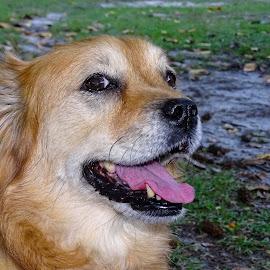 Chloe by David Walters - Animals - Dogs Portraits ( animals, nature, colors, chloe, dog, sony hx400v )