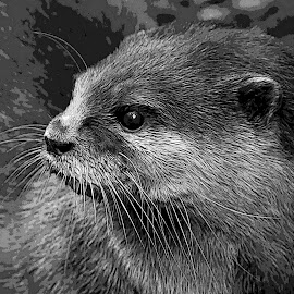 my first Otter by Joseph Ellwood - Animals Amphibians