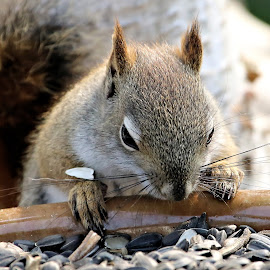 Saturdays Best 9 by Terry Saxby - Animals Other Mammals ( canada, terry, goderich, ontario, saxby, nancy, squirrel )