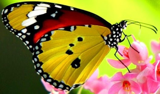 Butterfly Jigsaw Puzzle - screenshot