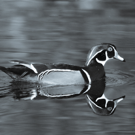 by Keith Sutherland - Black & White Animals