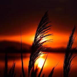by Gosha L - Landscapes Sunsets & Sunrises