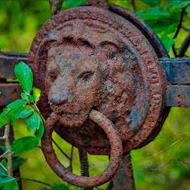 Old Gate Lion by Sue Delia - Artistic Objects Industrial Objects ( rust, driveway, old, metal, iron, gate, lion,  )