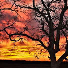 SkyFire by Trudy Mader - Landscapes Sunsets & Sunrises (  )