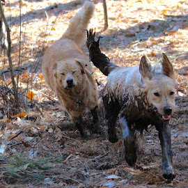 Eat my dirt! by Neil Storey - Animals - Dogs Running ( mud, dogs )