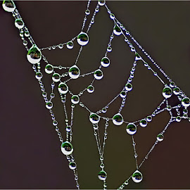 droplets by Leon Pelser - Nature Up Close Water ( 1/160, f 2.6, autu wb, iso 200, tripod,  )