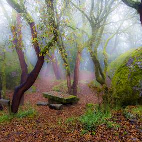 Num manto de mistério by Tempo Cativo Paulo Borges - Landscapes Forests ( manto de mistério, floresta encantada, nossa senhora das cortiças, nevoeiro, fotografia, photo, andré borges, bruma, photography, picoto: braga, neblina, mistério, sobreiros, tempo cativo, foto )