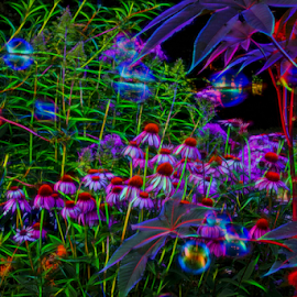 Garden Bubbles by Michael Buffington - Abstract Patterns ( environment, nature, color, colorful, neon, colors, coneflowers, bubbles, glowing, flowers, garden )
