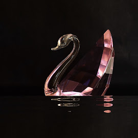 A crystal swan by Prasanta Das - Artistic Objects Glass ( reflection, swan, crystal )