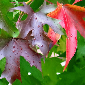 fall decorations by Dubravka Bednaršek - Nature Up Close Other Natural Objects ( orange, purple, colorful, green, colors, foliage, fall, drops, leaves, rain )