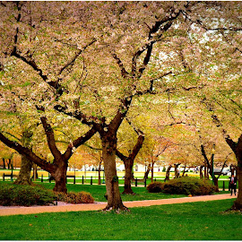 Springtime Park DC by Denny Paul - City,  Street & Park  City Parks ( color, parks, trees, washington dc, spring )