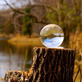 Crystal Ball by Dawn Friend - Artistic Objects Glass ( forest, crystal, tree,  )