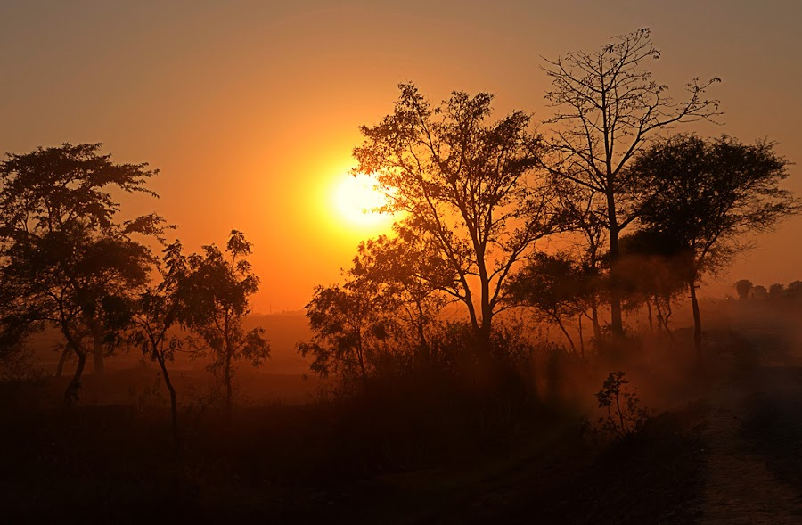 sunset by Manabendra Gupta - Landscapes Forests