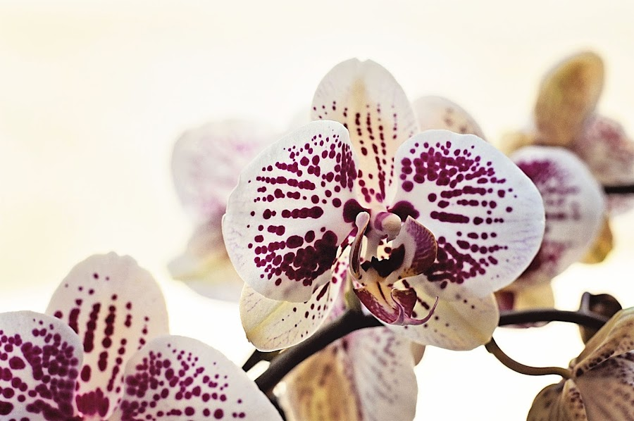 At the Florist by Elaine Tweedy - Nature Up Close Flowers - 2011-2013 ( orchids )