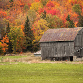 Fall Barn by William Ducklow - Landscapes Prairies, Meadows & Fields